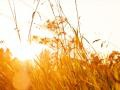 Welcome, September, cool and golden days!